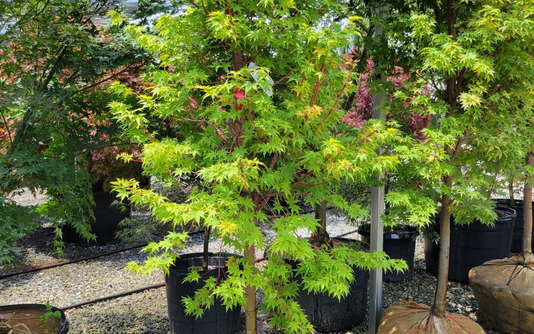 The Best Time of Year to Plant Trees and Shrubs